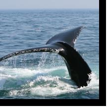 los_veneros_luxury_resorts-ballenas
